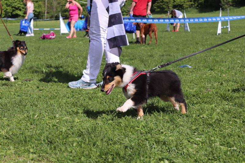 Agrias Hundepromenade 2018