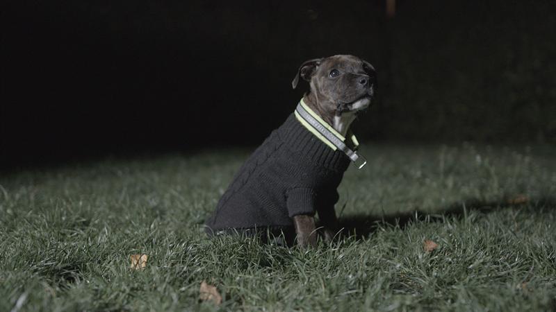 Hund p gressplen med refleks