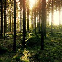 Good concept woods