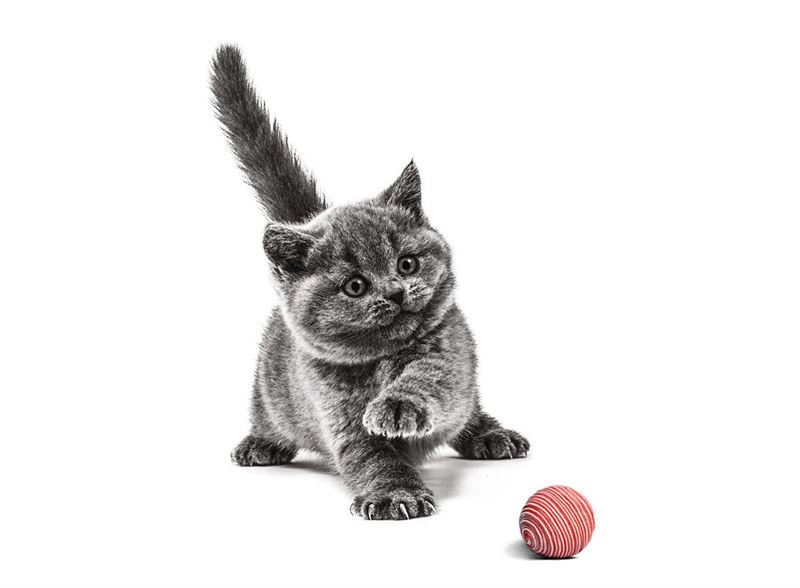 kattungar och mat