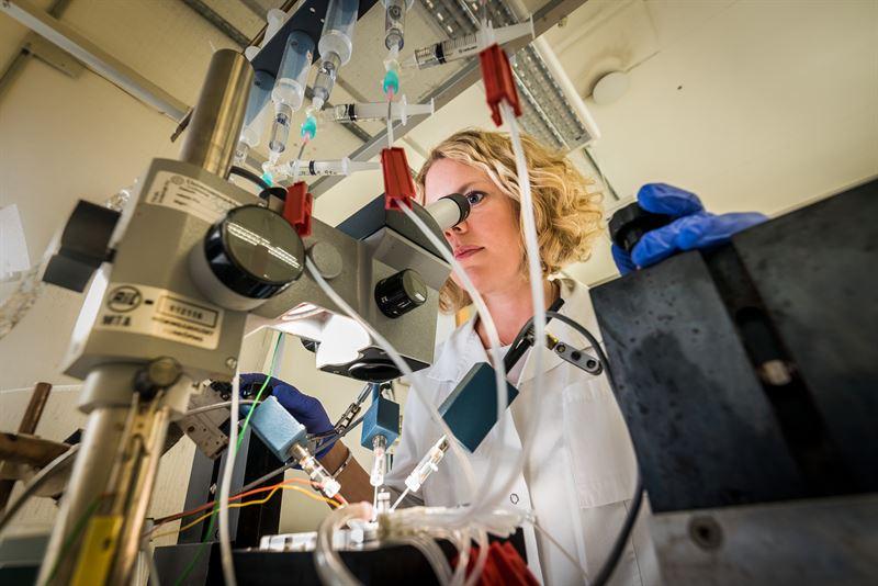 Forskare vid Linkpings universitet undersker hur lkemedelsliknande molekyler pverkar jonkanaler