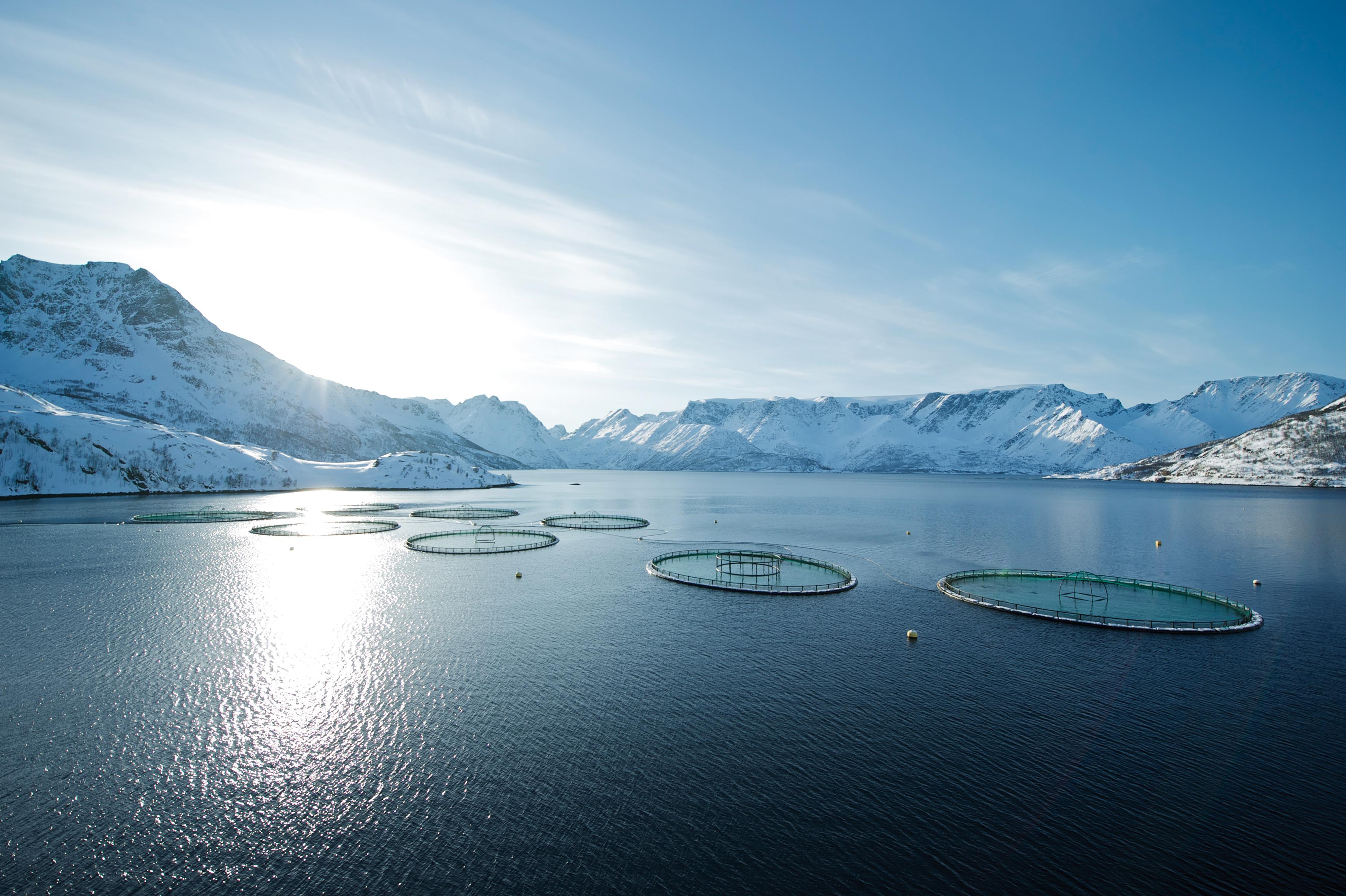 Aquakultur Norwegen