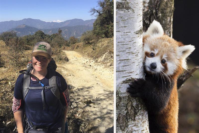 Jennie Westander i Nepal och en rd panda i Kolmrden
