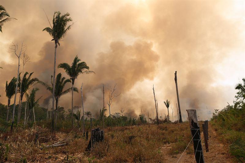 Eldssonger blir idag lngre och extrema brandperioder r vanligare i Amazonas och andra drabbade omrden
