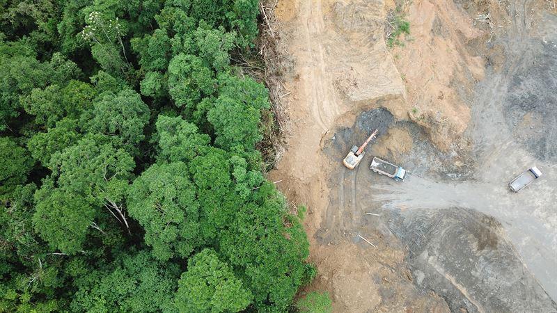 Tropiska skogar hotas fortfarande. Detta är Borneos djungel iMalaysia där skogen har skövlats för att bli palmoljeplantage. Foto: Shutterstock / Rich Carey