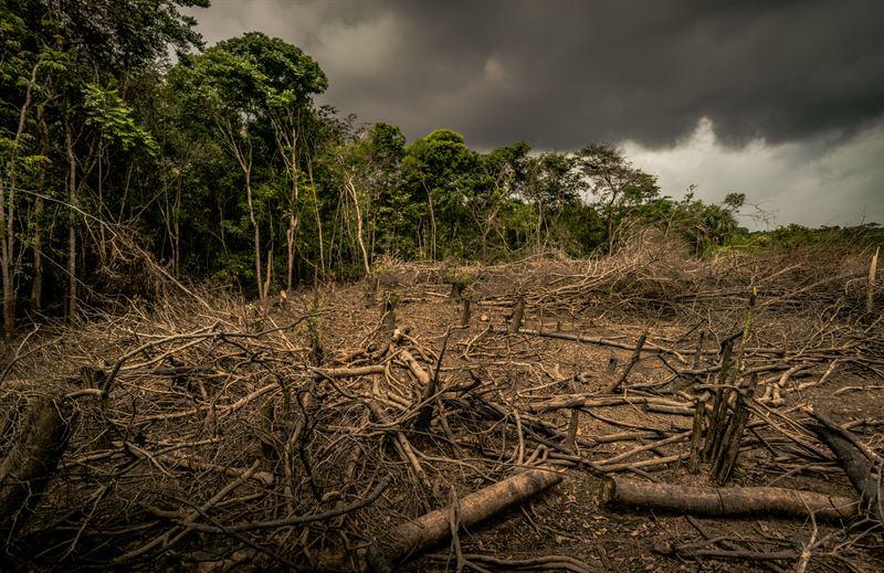 Avskogning Colombia