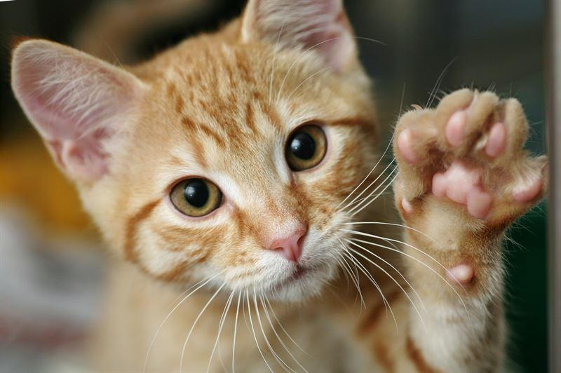 hur många katter får man ha