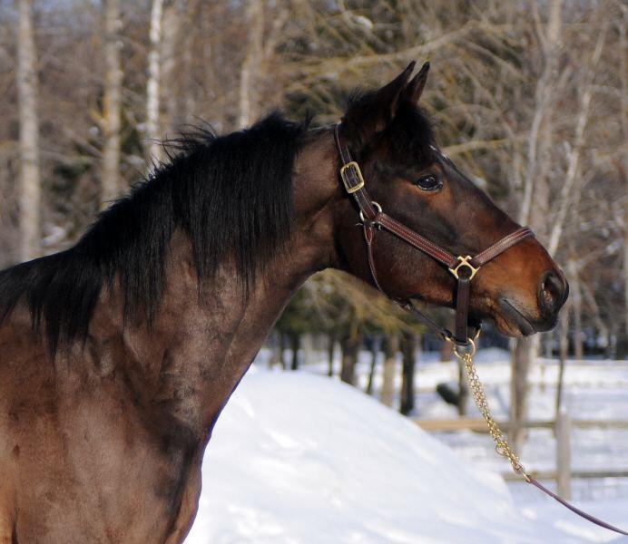 agria försäkring häst