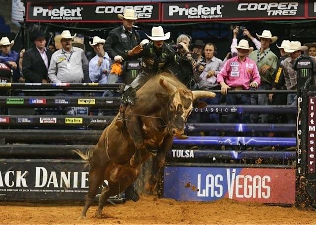 Professional Bull Riders Champion Bull Bushwacker Gets