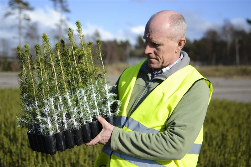 Plantskyddet Cambiguard