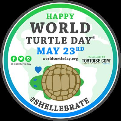 American Tortoise Rescue