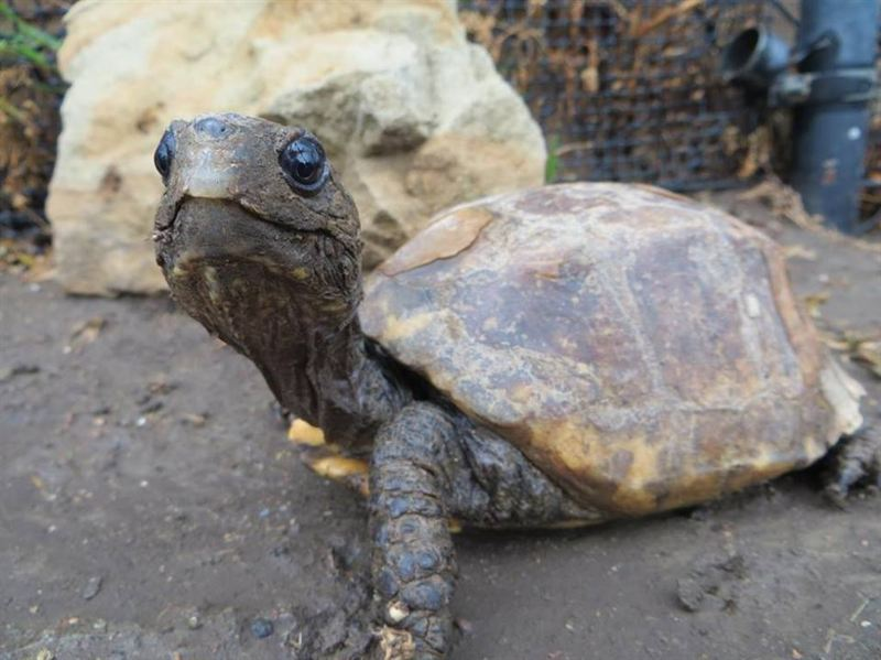 Call for Entries: 2015 Rescued Turtle and Tortoise Photo