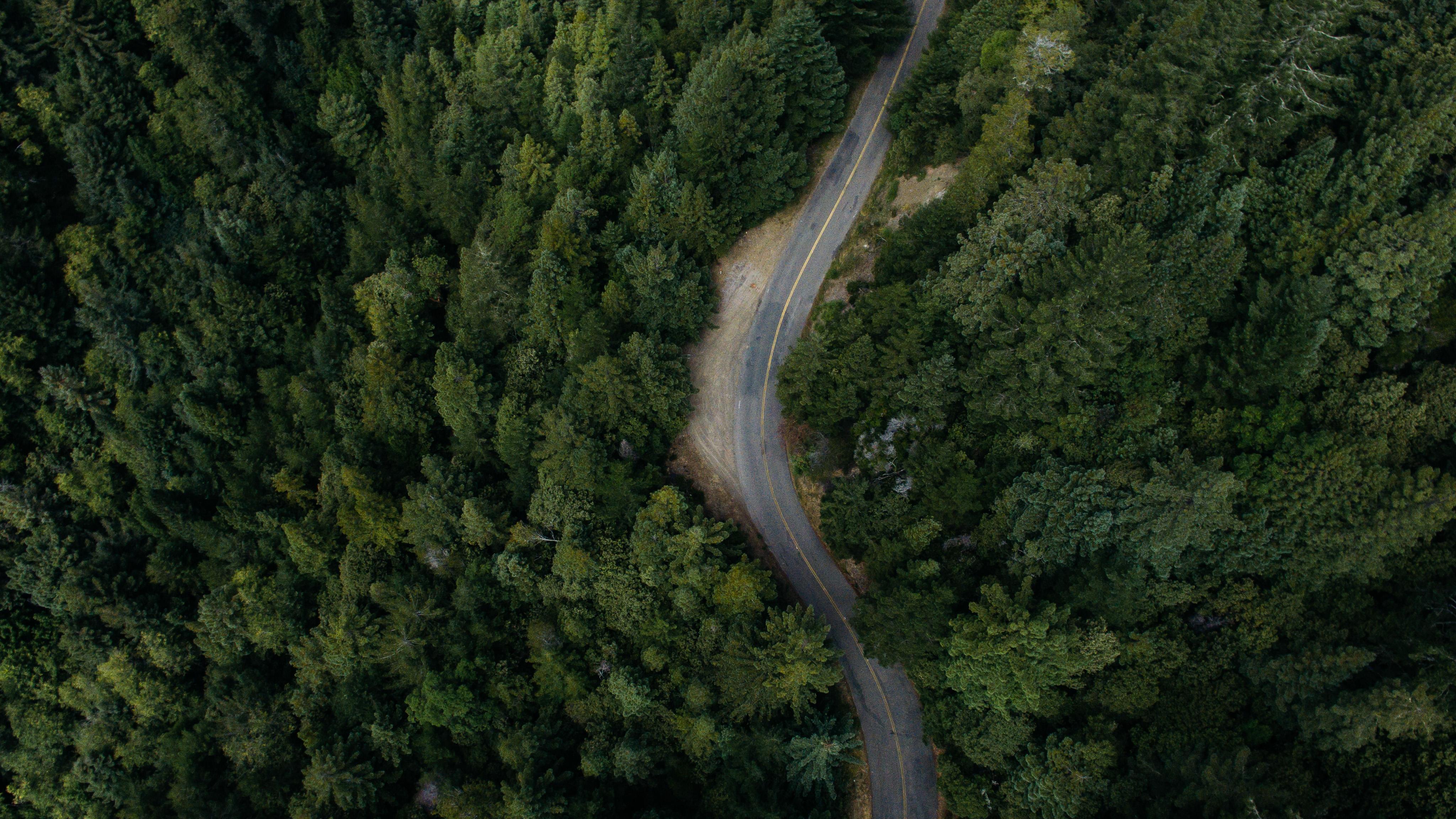 Forest Road Tieto