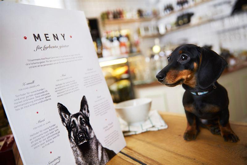 Tidlosa Kok I Sverige Ab :  restaurangmeny for hundar po Bee kok & bar  Royal Canin Sverige AB